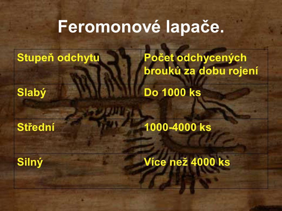 Feromonové lapače. Stupeň odchytuPočet odchycených brouků za dobu rojení SlabýDo 1000 ks Střední1000-4000 ks SilnýVíce než 4000 ks