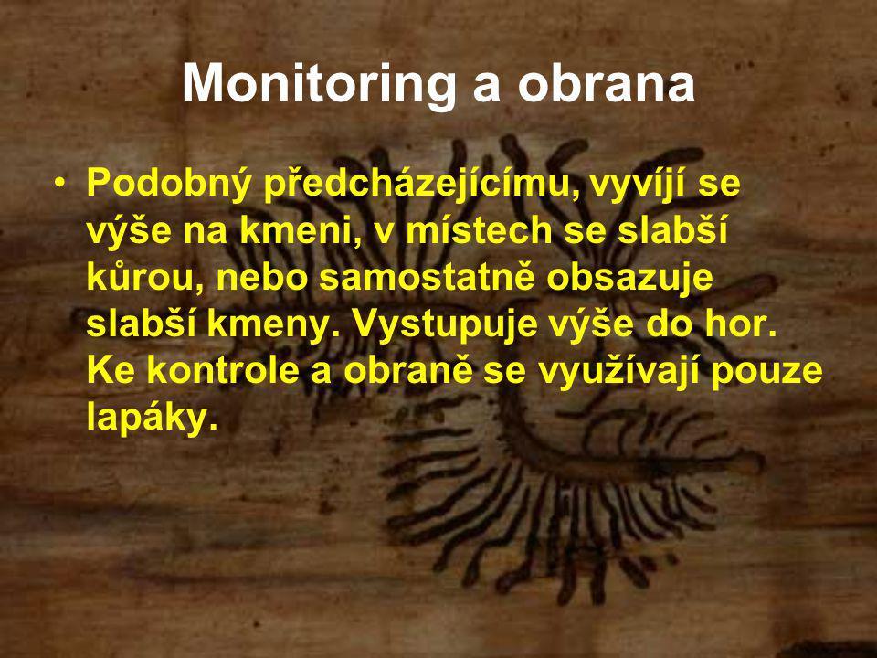 Monitoring a obrana Podobný předcházejícímu, vyvíjí se výše na kmeni, v místech se slabší kůrou, nebo samostatně obsazuje slabší kmeny.