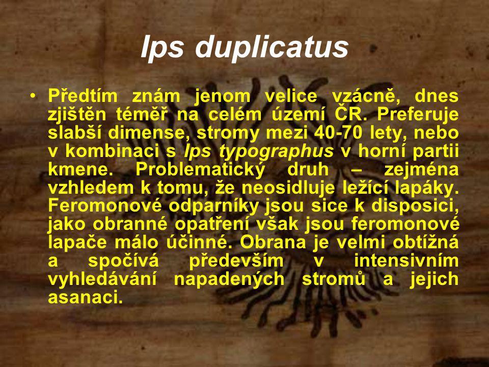 Předtím znám jenom velice vzácně, dnes zjištěn téměř na celém území ČR. Preferuje slabší dimense, stromy mezi 40-70 lety, nebo v kombinaci s Ips typog