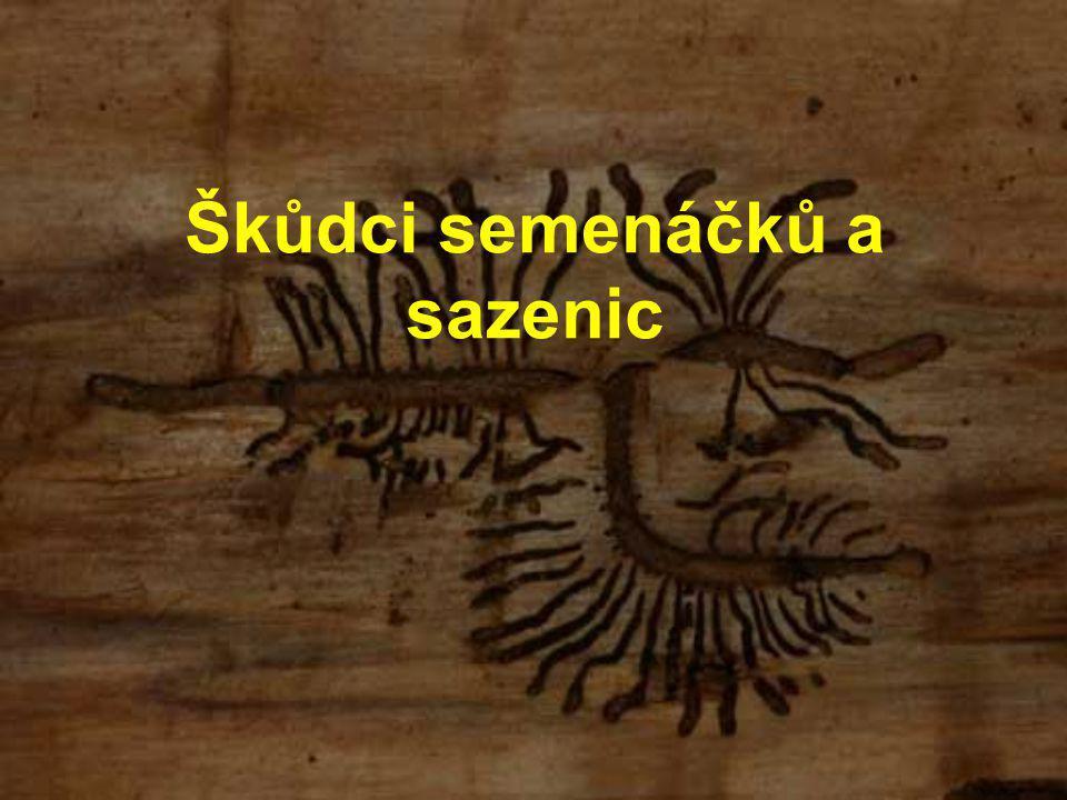 Škůdci semenáčků a sazenic