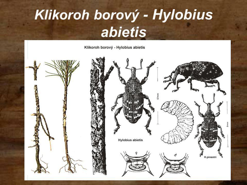 Klikoroh borový - Hylobius abietis