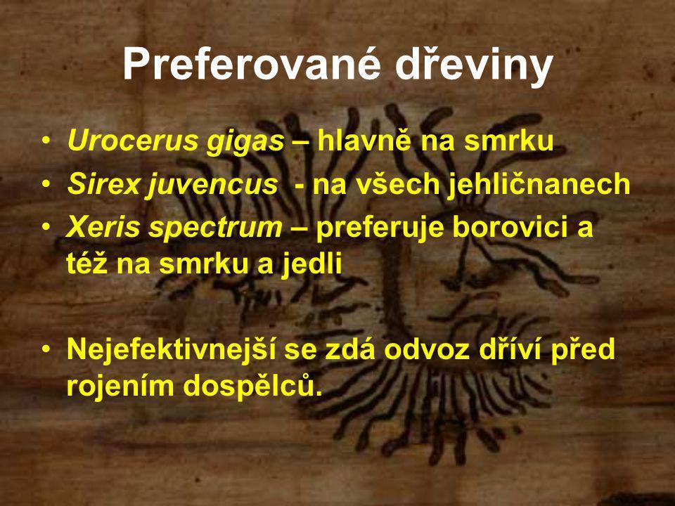 Preferované dřeviny Urocerus gigas – hlavně na smrku Sirex juvencus - na všech jehličnanech Xeris spectrum – preferuje borovici a též na smrku a jedli