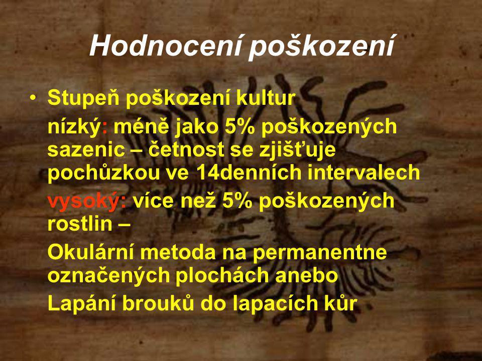 Stupeň poškození kultur nízký: méně jako 5% poškozených sazenic – četnost se zjišťuje pochůzkou ve 14denních intervalech vysoký: více než 5% poškozených rostlin – Okulární metoda na permanentne označených plochách anebo Lapání brouků do lapacích kůr Hodnocení poškození
