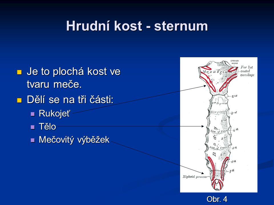 Hrudní kost - sternum Je to plochá kost ve tvaru meče. Je to plochá kost ve tvaru meče. Dělí se na tři části: Dělí se na tři části: Rukojeť Rukojeť Tě