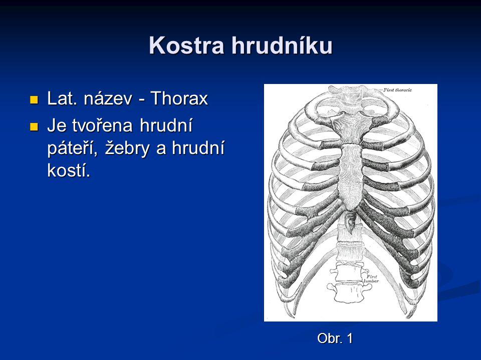 Lat. název - Thorax Lat. název - Thorax Je tvořena hrudní páteří, žebry a hrudní kostí. Je tvořena hrudní páteří, žebry a hrudní kostí. Obr. 1