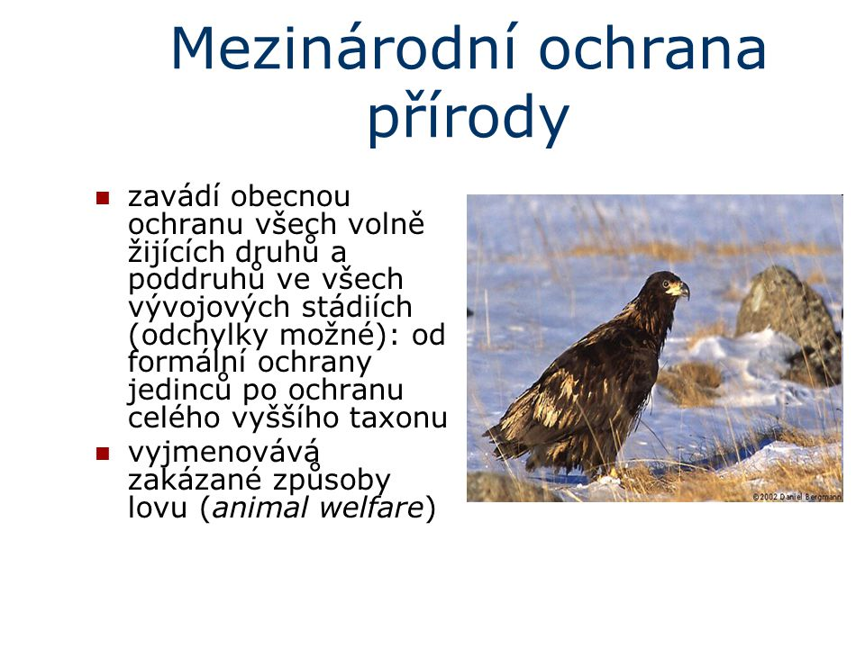 Mezinárodní ochrana přírody zavádí obecnou ochranu všech volně žijících druhů a poddruhů ve všech vývojových stádiích (odchylky možné): od formální oc