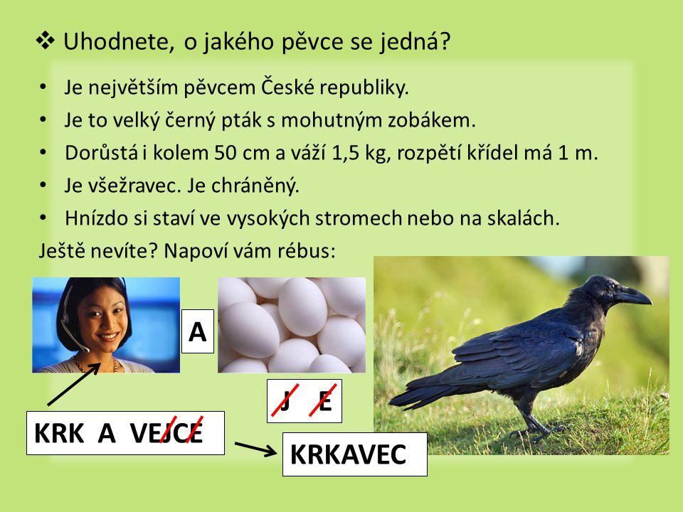  Uhodnete, o jakého pěvce se jedná? Je největším pěvcem České republiky. Je to velký černý pták s mohutným zobákem. Dorůstá i kolem 50 cm a váží 1,5