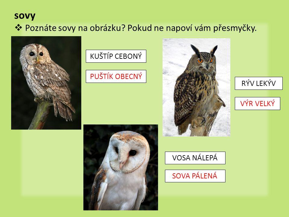 dravci  Přiřaďte k sobě obrázek, název a popis dravce.