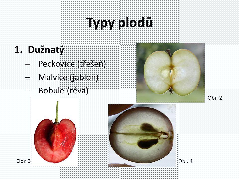Typy plodů 1.Dužnatý – Peckovice (třešeň) – Malvice (jabloň) – Bobule (réva) Obr. 2 Obr. 4 Obr. 3