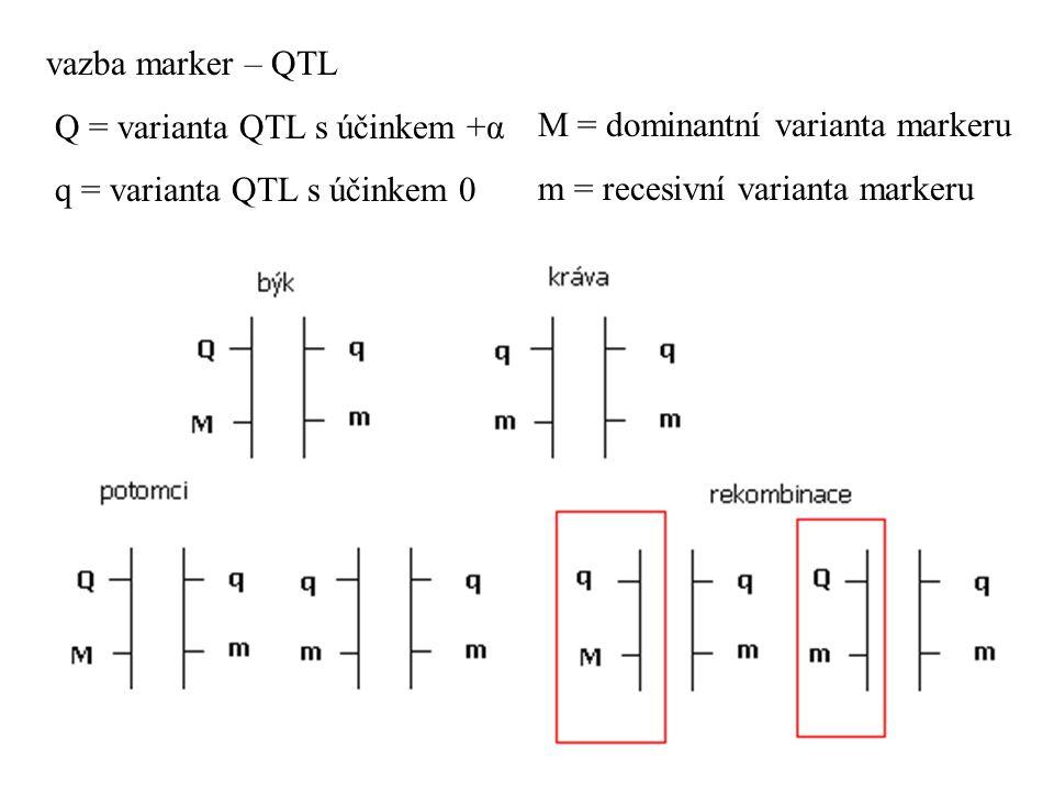 vazba marker – QTL Q = varianta QTL s účinkem +α q = varianta QTL s účinkem 0 M = dominantní varianta markeru m = recesivní varianta markeru