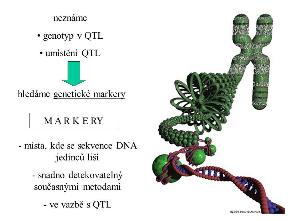 neznáme genotyp v QTL umístění QTL M A R K E RY - místa, kde se sekvence DNA jedinců liší - snadno detekovatelný současnými metodami - ve vazbě s QTL hledáme genetické markery