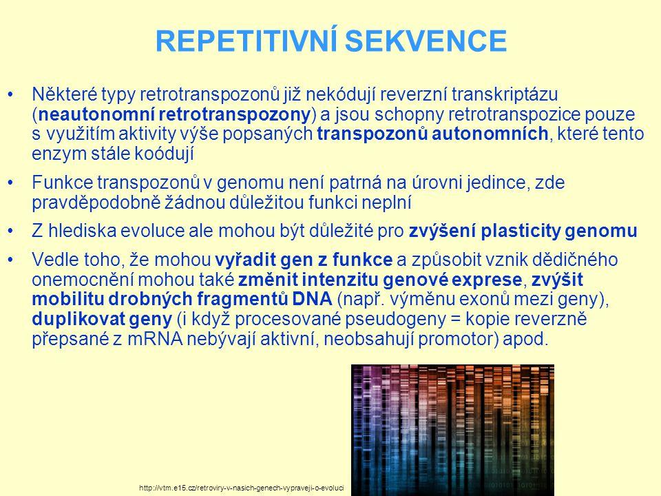 REPETITIVNÍ SEKVENCE Některé typy retrotranspozonů již nekódují reverzní transkriptázu (neautonomní retrotranspozony) a jsou schopny retrotranspozice