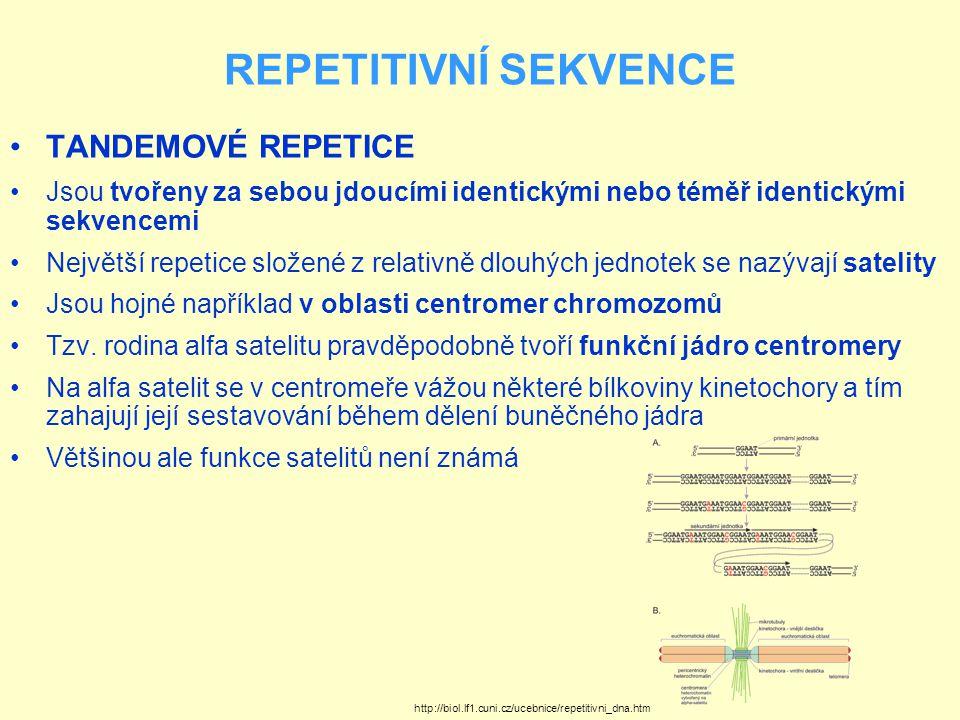 REPETITIVNÍ SEKVENCE Ukázka repetitivních sekvencí rodiny alfa satelitu Tyto sekvence na sebe vážou proteiny, které jsou součástí kinetochory http://biol.lf1.cuni.cz/ucebnice/repetitivni_dna.htm