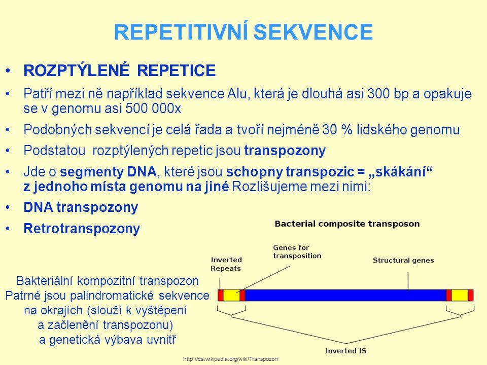 REPETITIVNÍ SEKVENCE DNA TRANSPOZONY se v lidském genomu nacházejí pouze v neaktivním stavu díky akumulaci mutací, ke kterým došlo v průběhu evoluce obratlovců Jádrem sekvence transpozonu je gen kódující enzym transpozázu, která je schopna vyštěpit transpozon z původního místa na chromozomu, oba volné konce DNA ligovat (spojit) a začlenit transpozon na nové místo (rozpoznáním specifické sekvence jinde v genomu, naštěpením hostitelské DNA a ligováním transpozonu na nové místo) Je vidět, že pohyb DNA transpozonů po genomu funguje na principu vyjmout-vložit a počet jejich kopií se nemění Z hlediska lékařské genetiky jsou DNA transpozony zajímavé schopností štěpit DNA na vysoce specifických sekvencích, což bude patrně možné využít v oblasti genové terapie Z vývojového hlediska je pravděpodobné, že transpozony sehrály svou úlohu při evoluci imunitního systému Vyštěpení podjednotek imunoglobulinových molekul se děje podobně, jako vyštěpení transpozonů a také enzym uplatňující se při maturaci (kompletaci) molekul imunoglobulinů se patrně vyvinul z transpozázy