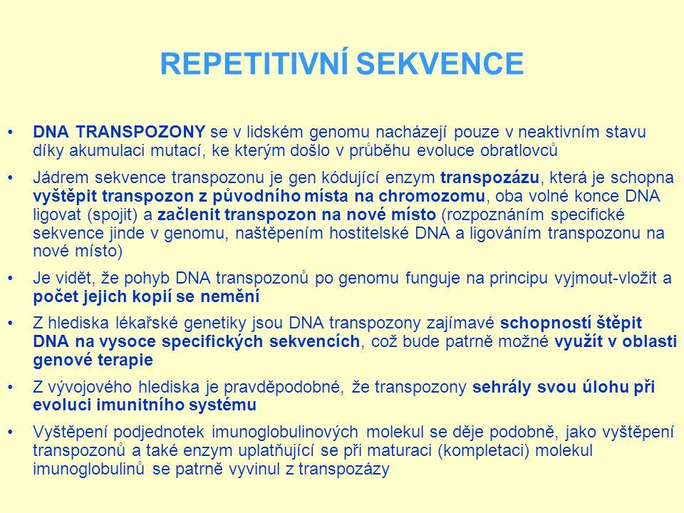 REPETITIVNÍ SEKVENCE RETROTRANSPOZONY jsou v lidském genomu ještě důležitější než předchozí skupina Jsou také rozšířenější (tvoří nejméně 45% lidského jaderného genomu) Mnohé z nich mutacemi ztratily svou aktivitu, ale u řady z nich tomu tak není Vzhledem k tomu, že vývojově jsou odvozeny z retrovirů, jejich pohyb v buňce se děje pomocí enzymu reverzní transkriptázy Jejich přesun na nové míso probíhá tak, že jsou pomocí buněčné RNA- polymerázy přepsány do molekuly RNA, zatímco původní kopie zůstává na svém místě v DNA RNA kopie je reverzní transkriptázou přepsána do DNA, která je pak vložena na nové místo v genomu (při transpozicích jich tedy přibývá)