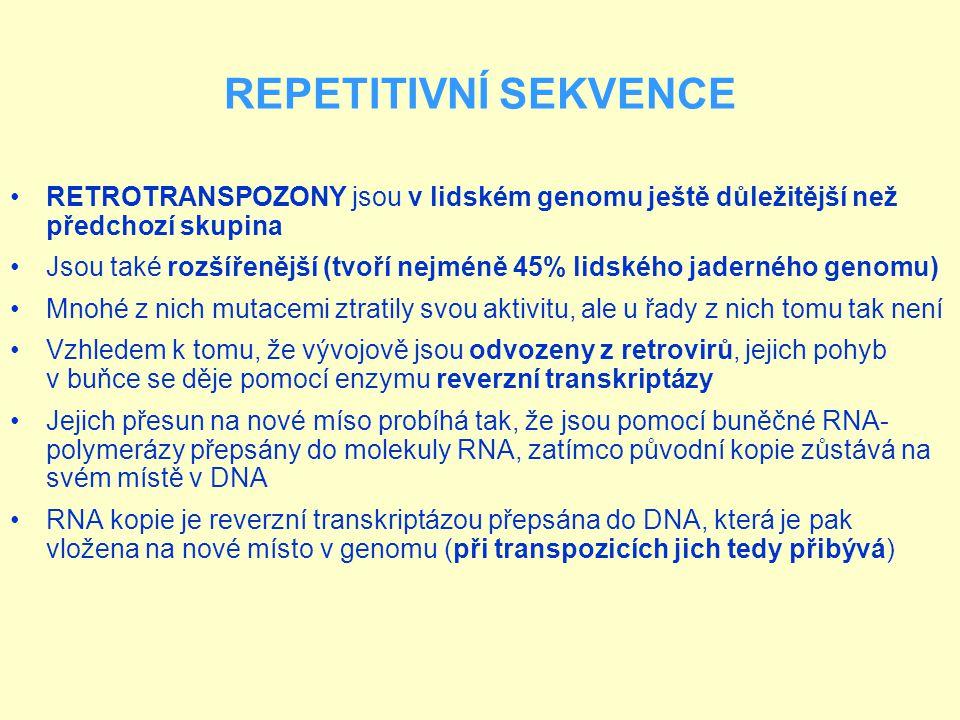 REPETITIVNÍ SEKVENCE Zajímavou skupinou retrotranspozonů jsou LTR retrotranspozony, které jsou označovány jako endogenní retroviry Svým složením skutečně připomínají proviry infekčních virů jako je HIV Chybí jim však (nebo je mutován) nejméně jeden gen potřebný pro sestavení kompletních virových částic Proto se mohou pohybovat jen uvnitř buněk http://vtm.e15.cz/retroviry-v-nasich-genech-vypraveji-o-evoluci