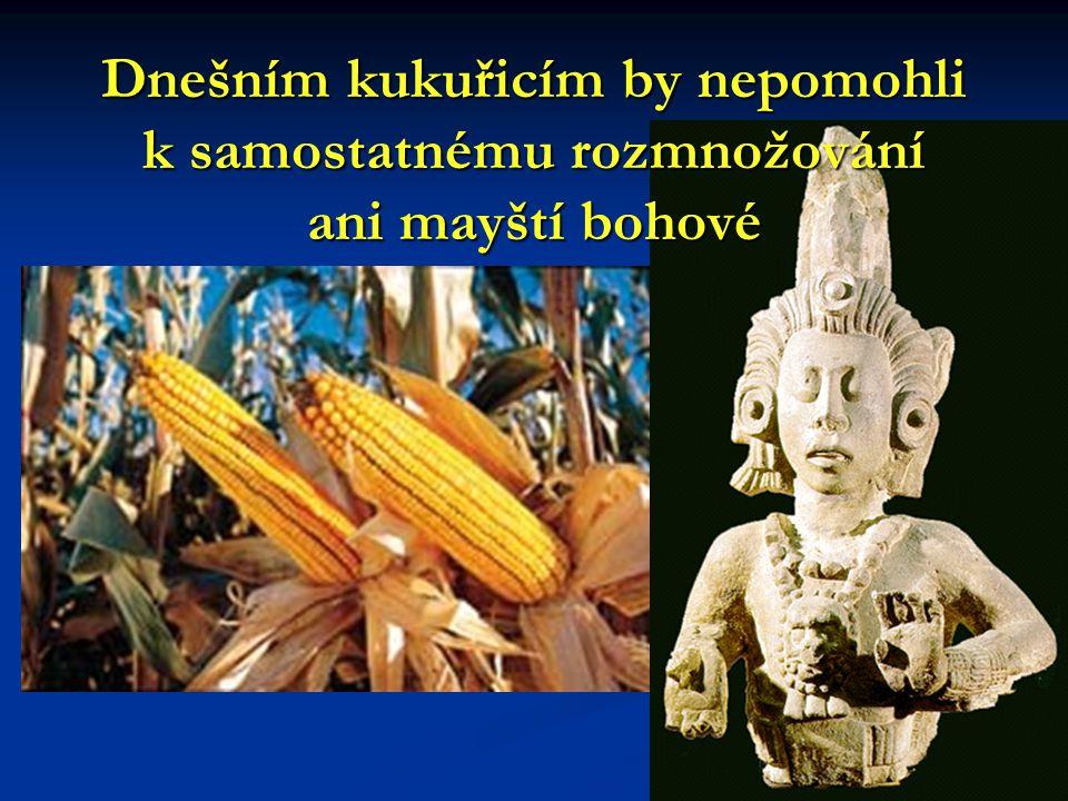 Dnešním kukuřicím by nepomohli k samostatnému rozmnožování ani mayští bohové