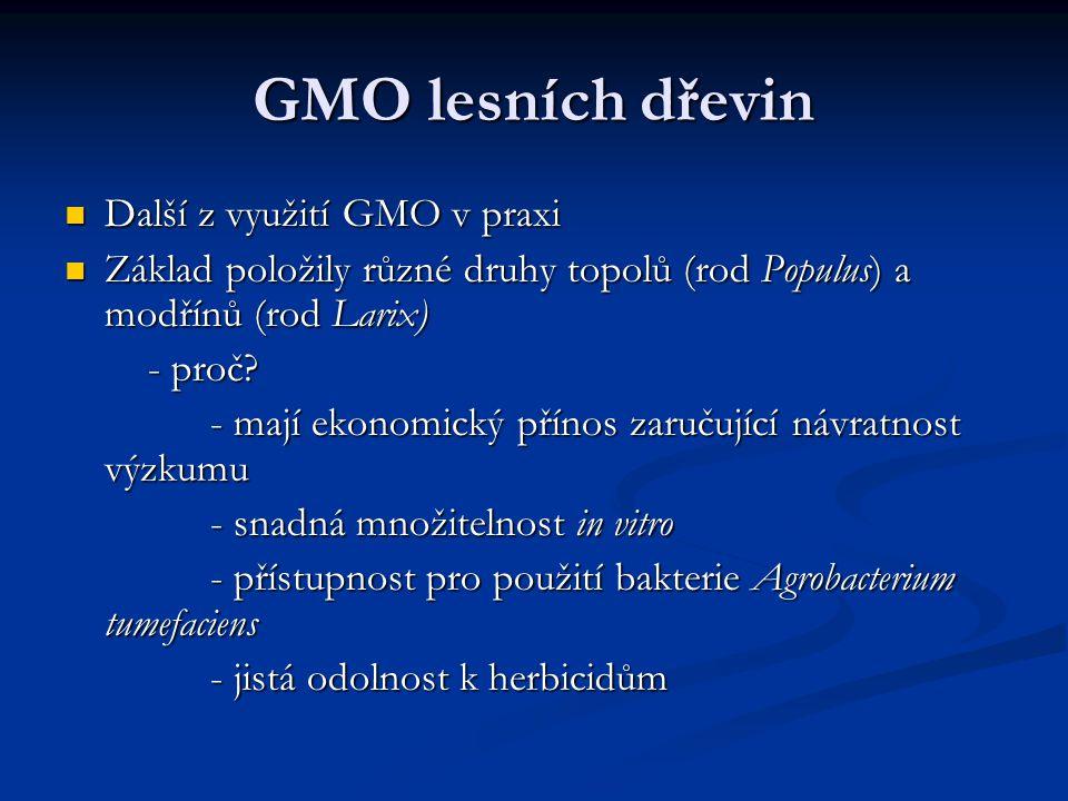GMO lesních dřevin Další z využití GMO v praxi Další z využití GMO v praxi Základ položily různé druhy topolů (rod Populus) a modřínů (rod Larix) Zákl