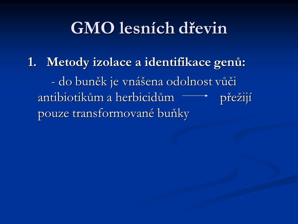 GMO lesních dřevin 1. Metody izolace a identifikace genů: 1. Metody izolace a identifikace genů: - do buněk je vnášena odolnost vůči antibiotikům a he