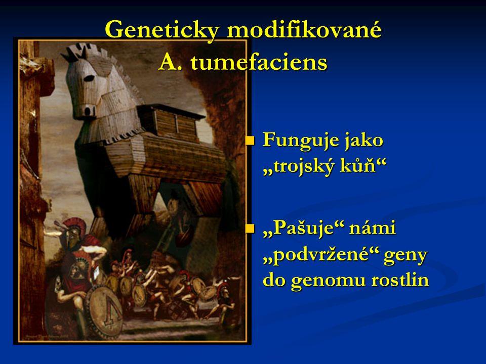 "Geneticky modifikované A. tumefaciens Funguje jako ""trojský kůň"" Funguje jako ""trojský kůň"" ""Pašuje"" námi ""podvržené"" geny do genomu rostlin ""Pašuje"""