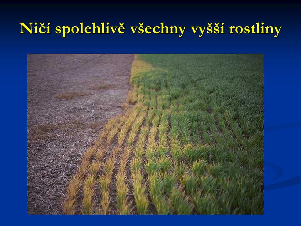 GM kukuřice Ve všem lepší než tradiční kukuřice Ve všem lepší než tradiční kukuřice Tradiční kukuřice postihuje biodiverzitu mnohem více než jakákoliv jiná plodina.