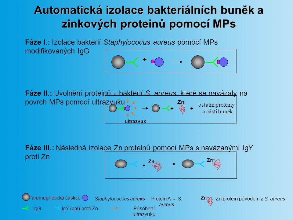 Ověření imobilizace IgG na MPs bez MPs s MPs po MPs 270.0 200.0 130.0 72.0 30.0 3.0 0.7 0.0 (počet buněk*10 3 ) Růst buněk S.