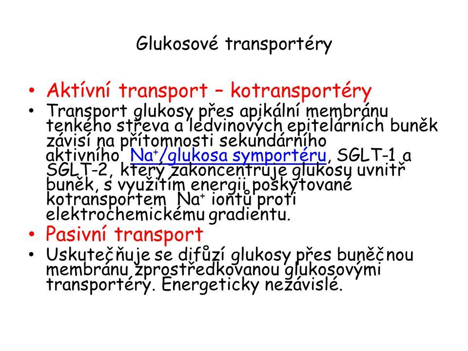 Glukosové transportéry-12 TM (transmembránové proteiny) (500 AMK).