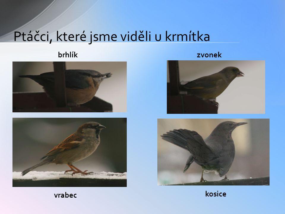 brhlíkzvonek vrabec kosice Ptáčci, které jsme viděli u krmítka