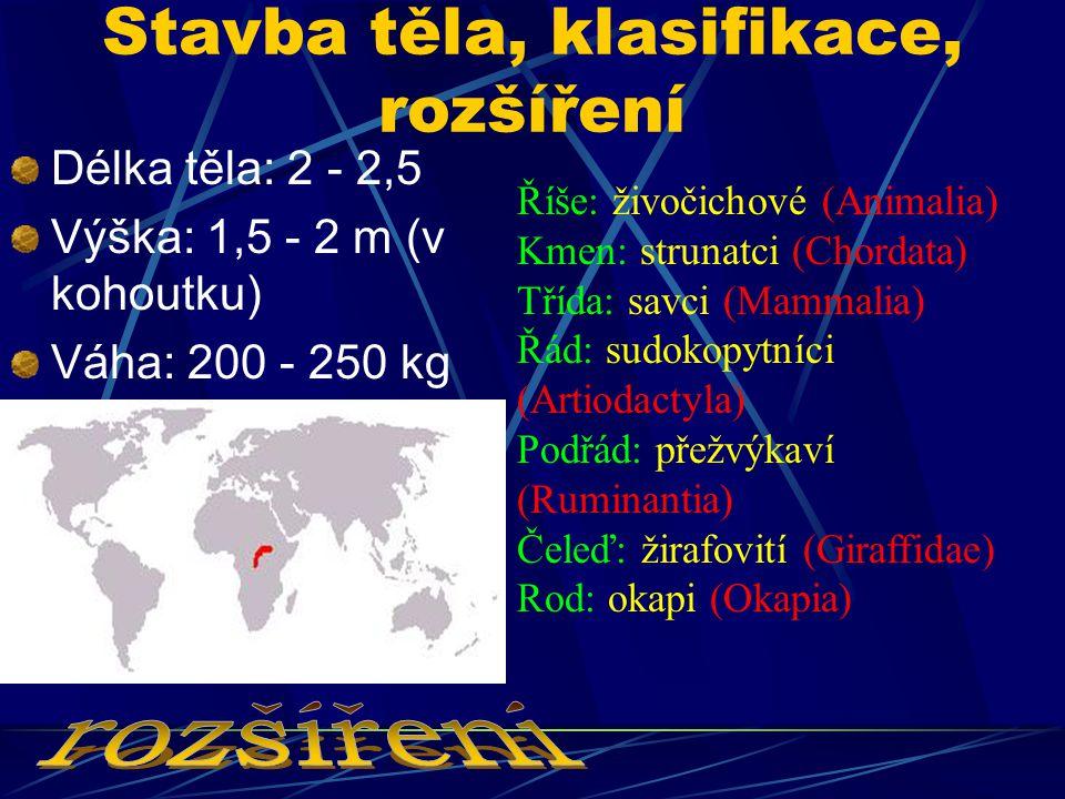 Stavba těla, klasifikace, rozšíření Délka těla: 2 - 2,5 Výška: 1,5 - 2 m (v kohoutku) Váha: 200 - 250 kg Říše: živočichové (Animalia) Kmen: strunatci