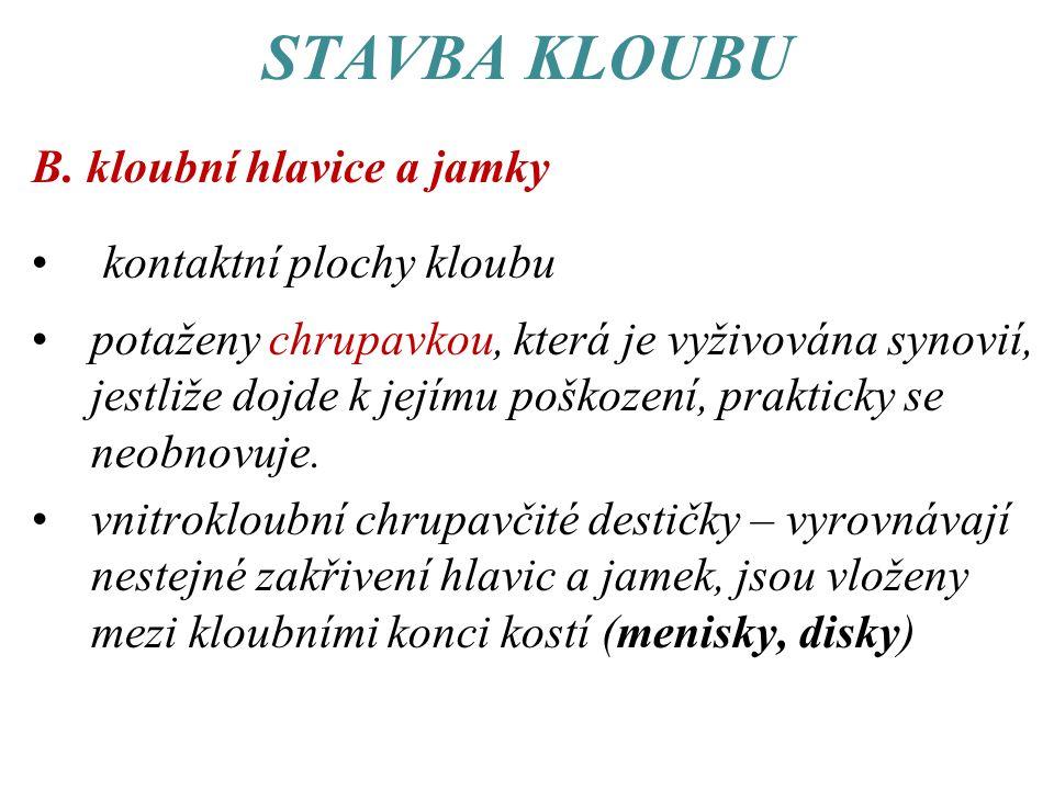 STAVBA KLOUBU B.