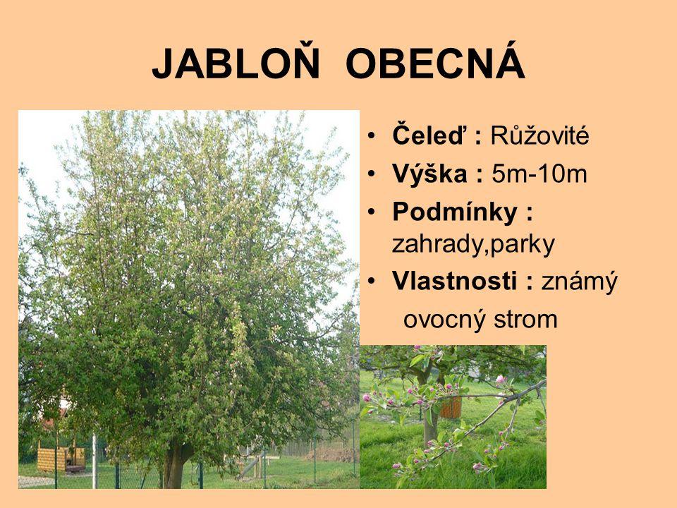 JABLOŇ OBECNÁ Čeleď : Růžovité Výška : 5m-10m Podmínky : zahrady,parky Vlastnosti : známý ovocný strom