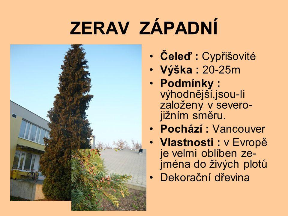 ZERAV ZÁPADNÍ Čeleď : Cypřišovité Výška : 20-25m Podmínky : výhodnější,jsou-li založeny v severo- jižním směru.