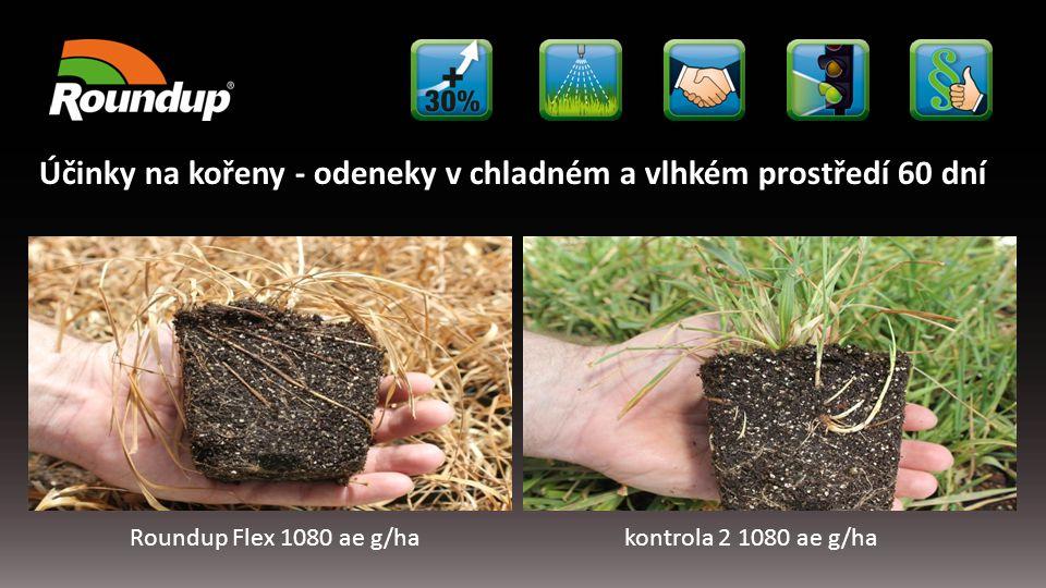 Roundup Flex 1080 ae g/hakontrola 2 1080 ae g/ha Účinky na kořeny - odeneky v chladném a vlhkém prostředí 60 dní