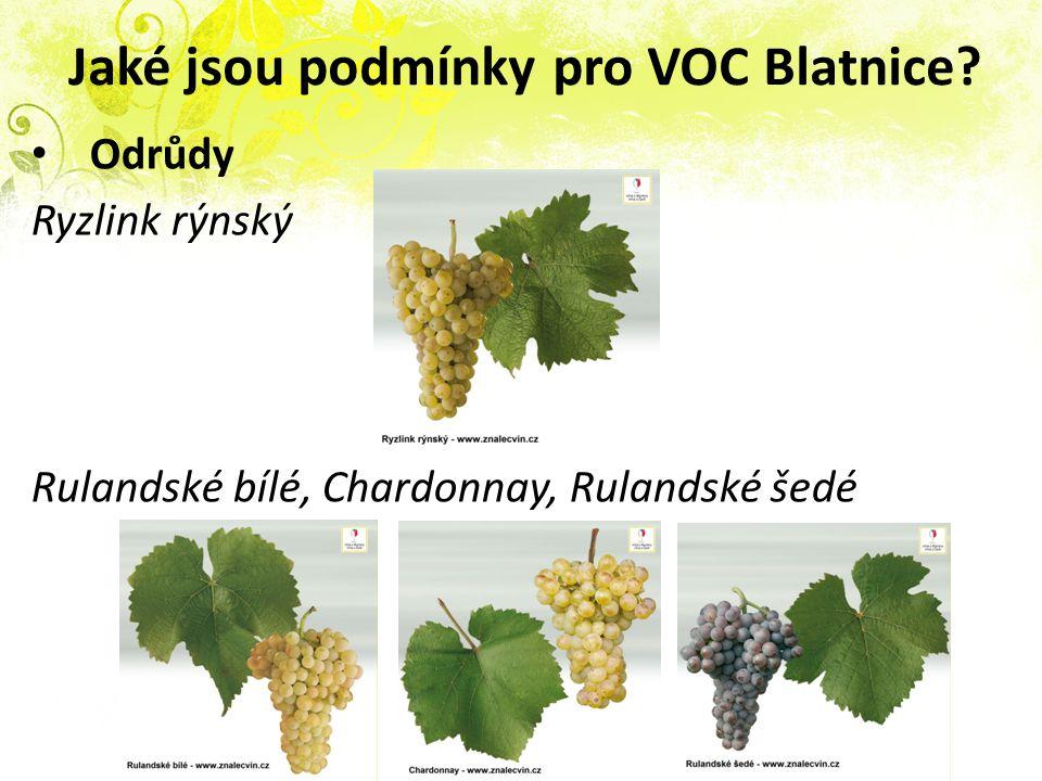 Jaké jsou podmínky pro VOC Blatnice? Odrůdy Ryzlink rýnský Rulandské bílé, Chardonnay, Rulandské šedé