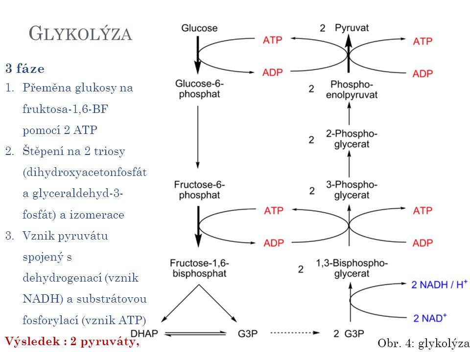G LYKOLÝZA 3 fáze 1.Přeměna glukosy na fruktosa-1,6-BF pomocí 2 ATP 2.Štěpení na 2 triosy (dihydroxyacetonfosfát a glyceraldehyd-3- fosfát) a izomerace 3.Vznik pyruvátu spojený s dehydrogenací (vznik NADH) a substrátovou fosforylací (vznik ATP) Výsledek : 2 pyruváty, 2 ATP, 2 NADH Obr.