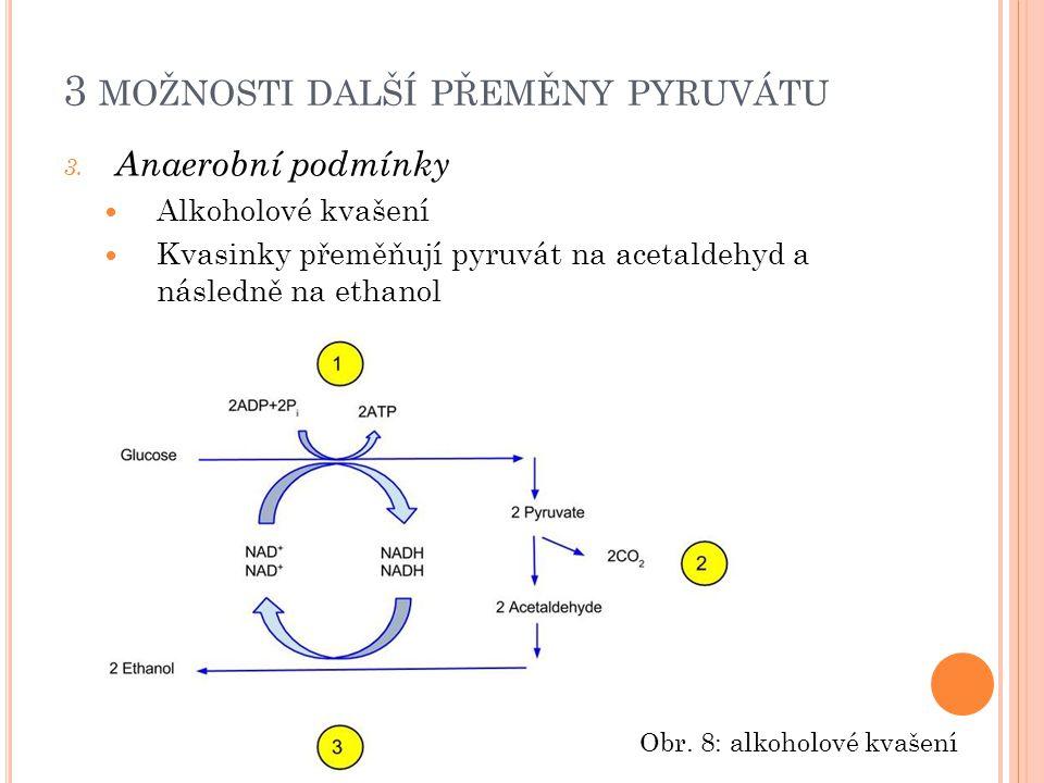3 MOŽNOSTI DALŠÍ PŘEMĚNY PYRUVÁTU 3.