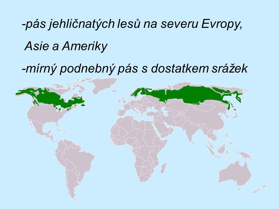 -pás jehličnatých lesů na severu Evropy, Asie a Ameriky -mírný podnebný pás s dostatkem srážek