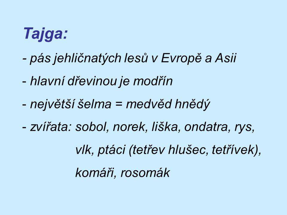 Tajga: - pás jehličnatých lesů v Evropě a Asii - hlavní dřevinou je modřín - největší šelma = medvěd hnědý - zvířata: sobol, norek, liška, ondatra, rys, vlk, ptáci (tetřev hlušec, tetřívek), komáři, rosomák