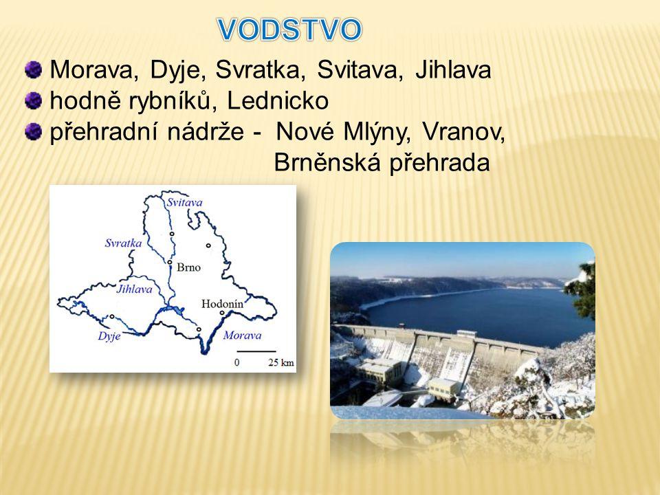 Morava, Dyje, Svratka, Svitava, Jihlava hodně rybníků, Lednicko přehradní nádrže - Nové Mlýny, Vranov, Brněnská přehrada