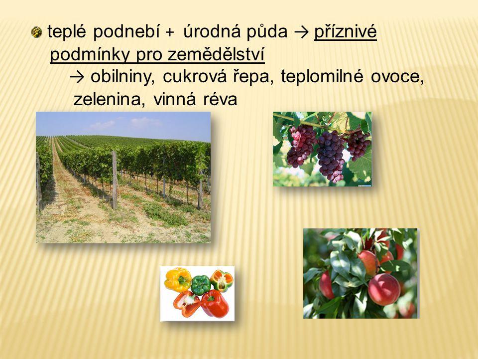 teplé podnebí + úrodná půda → příznivé podmínky pro zemědělství → obilniny, cukrová řepa, teplomilné ovoce, zelenina, vinná réva