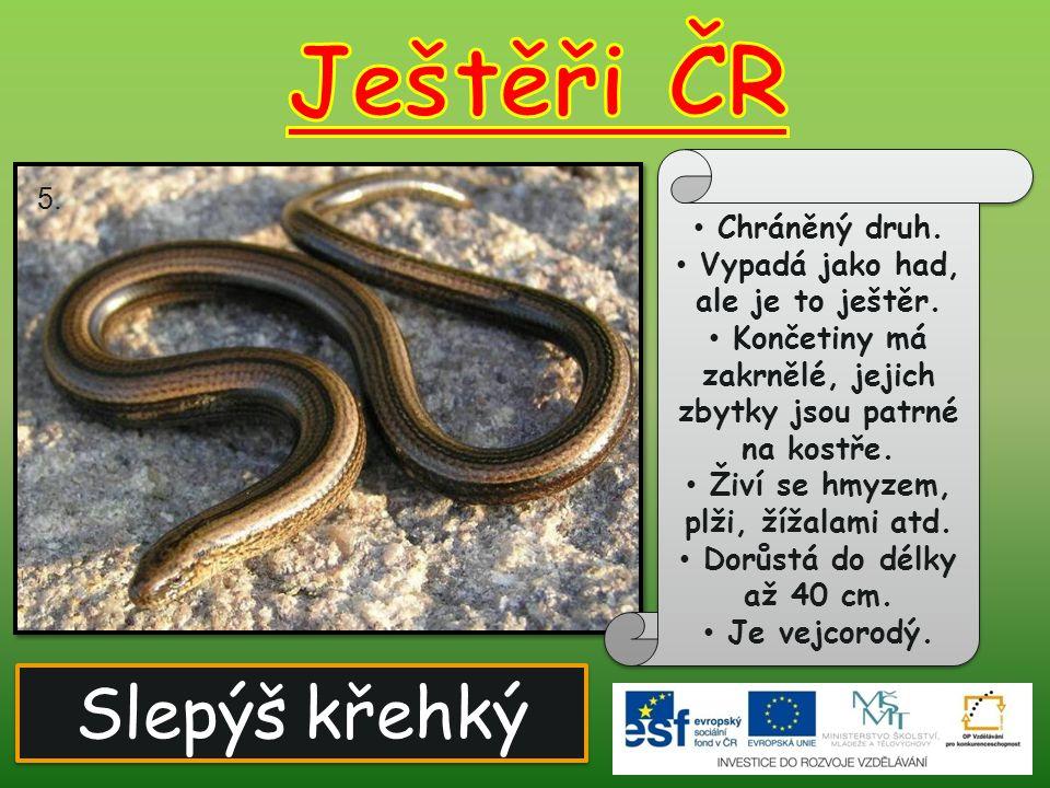 Slepýš křehký Chráněný druh.Vypadá jako had, ale je to ještěr.