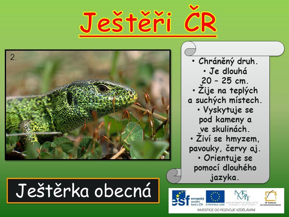 Ještěrka obecná Chráněný druh. Je dlouhá 20 – 25 cm. Žije na teplých a suchých místech. Vyskytuje se pod kameny a ve skulinách. Živí se hmyzem, pavouk