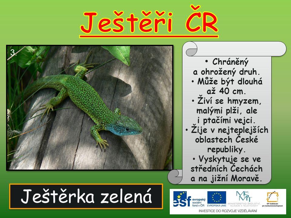 Ještěrka zelená Chráněný a ohrožený druh.Může být dlouhá až 40 cm.