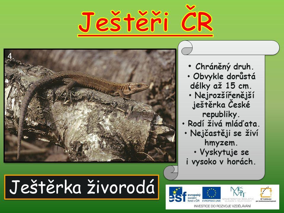 Chráněný druh.Obvykle dorůstá délky až 15 cm. Nejrozšířenější ještěrka České republiky.