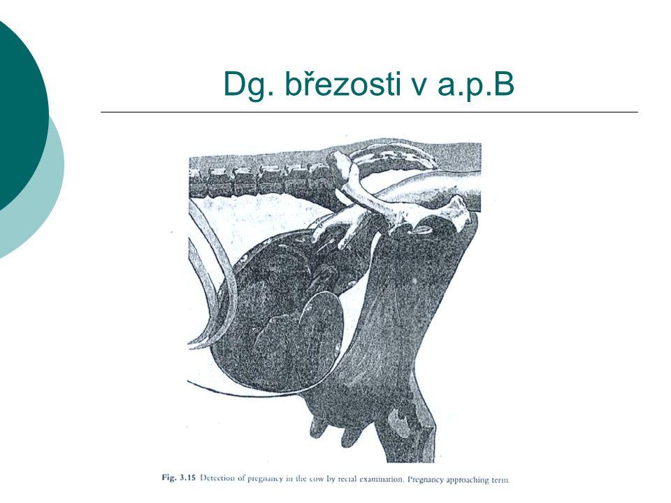 Laboratorní dg.březosti -B  Progesteronový test – RIA, ELISA Mléko, krev – 19.den, 23.