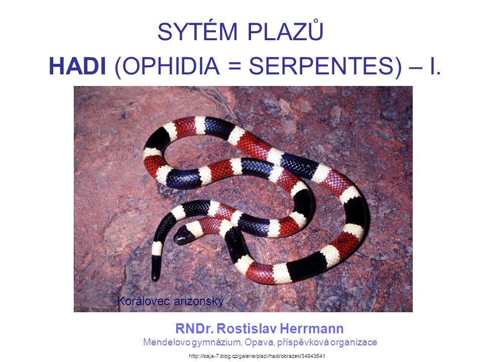 HADI (OPHIDIA = SERPENTES) Vyskytují se od spodní křídy do současnosti.