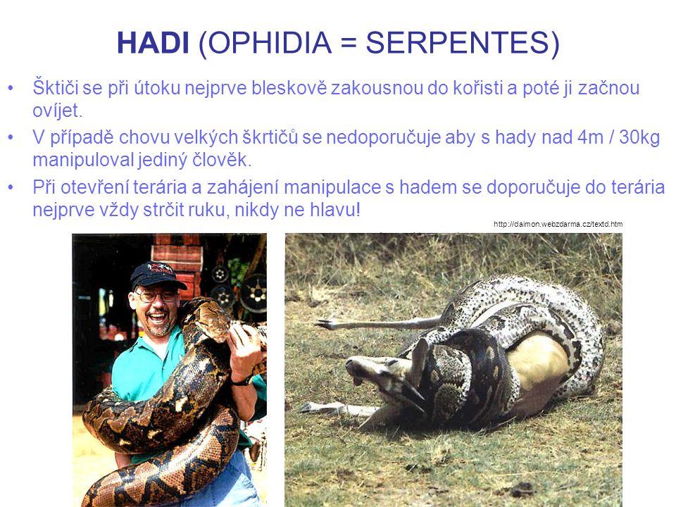 HADI (OPHIDIA = SERPENTES ) http://www.youtube.com/watch?v=dVRhRzE_AkQ http://www.youtube.com/watch?v=AJ2l4owxC7s Ukázka útoku škrtiče na krokodýla Hadí kanibalismus