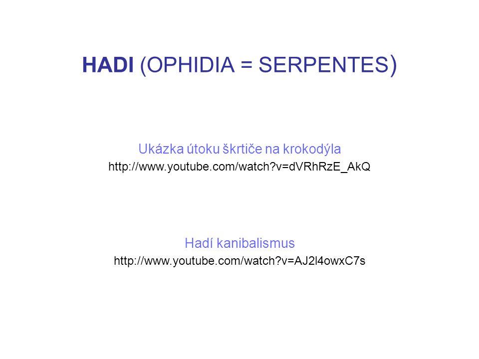 HADI (OPHIDIA = SERPENTES ) http://www.youtube.com/watch v=dVRhRzE_AkQ http://www.youtube.com/watch v=AJ2l4owxC7s Ukázka útoku škrtiče na krokodýla Hadí kanibalismus