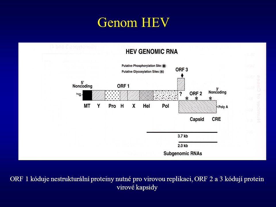 Léčba chronické infekce HEV Není známa Možné přístupy v budoucnosti – neutralizující protilátky (lidské či šimpanzí) proti HEV Kazustiky s ribavirinem – Toulouse University Hospital Pacient 1 79 let, chronické jaterní onemocnění, akutní hepatitida a akutní renální selhání, HEV RNA+ ve stolici i v séru ribavirin (RBV) 200 mg obden, rychlý pokles HEV RNA v séru, za 1 měsíc negativní, za 2 měsíce úplná úzdrava včetně ukončení HD Pacient 2 blíže nedefinován RBV 1000 mg denně, za 1 měsíc HEV RNA v séru negativní Péron JM et al.