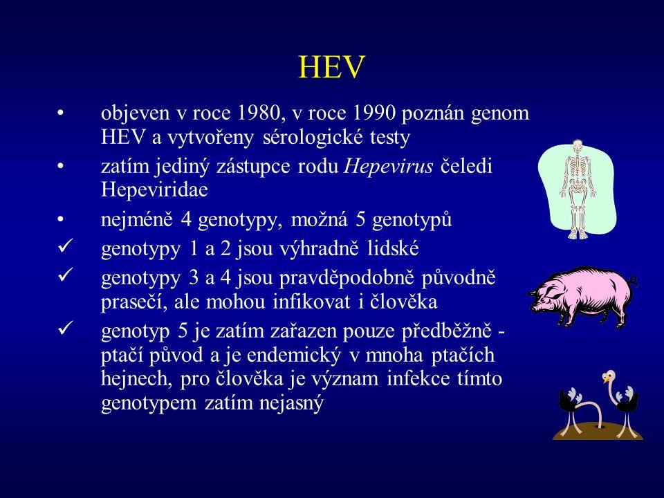 Přenos infekce HEV od dárce s okultní infekcí HEV Příjemce – 73letý muž, NASH, HCC, po OLT prednisolon, tacrolimus, rapamycin, úmrtí na septický šok při panenterokolitidě Dárce – 65letý muž, infarkt, anti-HEV-, HEV RNA v séru- Schlosser B et al.